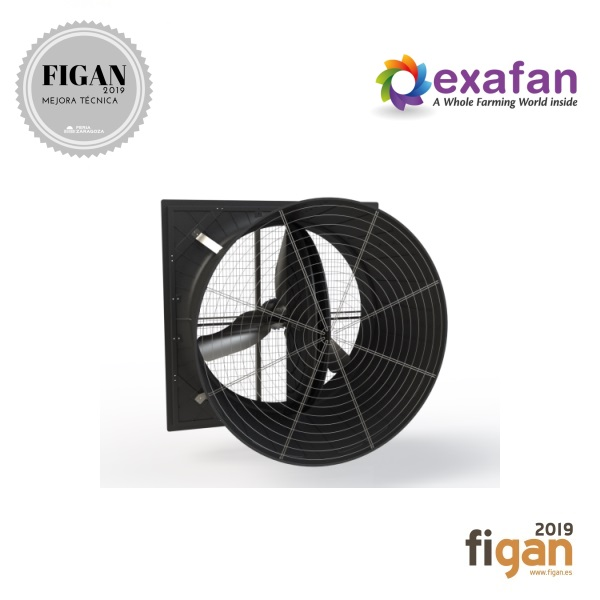 EX60 EOLO DIRECT MOTOR FAN